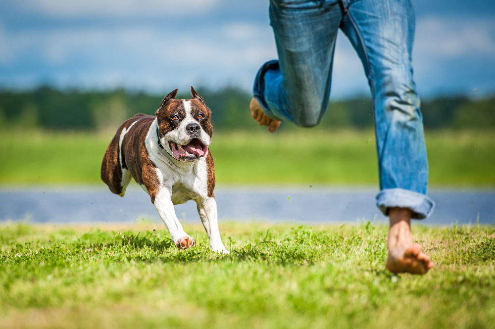 dog running in the grass behind owner