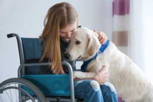 A large golden retriever service dog being embraced by a yougn girl in a wheelchair